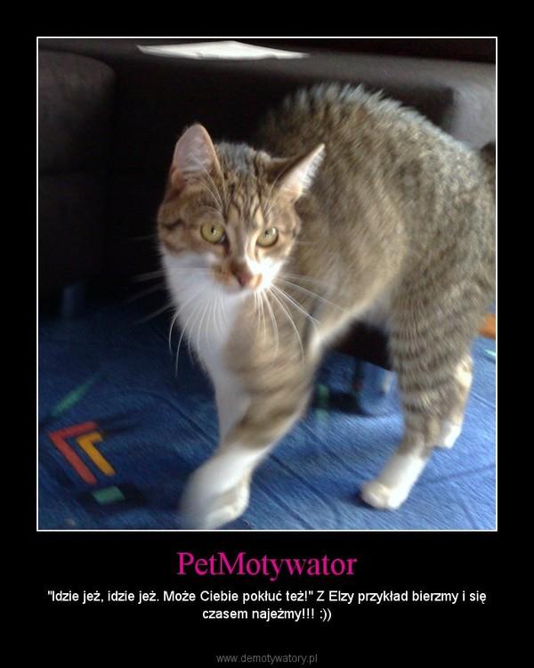 """PetMotywator – """"Idzie jeż, idzie jeż. Może Ciebie pokłuć też!"""" Z Elzy przykład bierzmy i się czasem najeżmy!!! :))"""