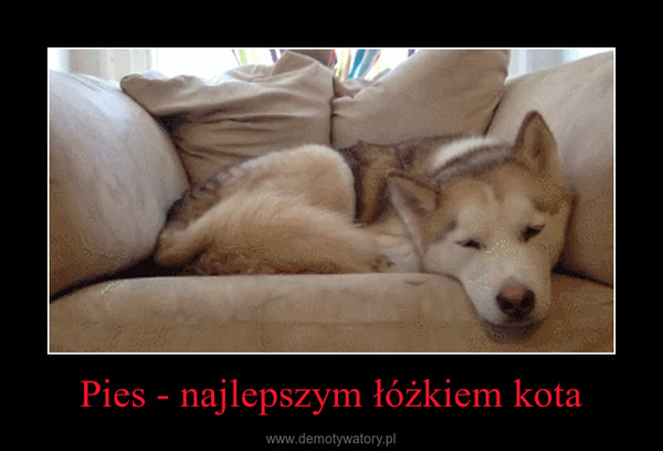 Pies - najlepszym łóżkiem kota –