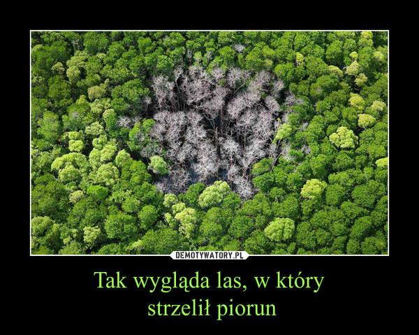 Tak wygląda las, w który strzelił piorun –