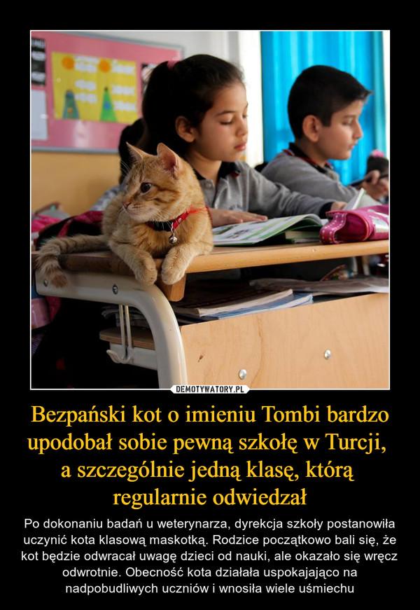 Bezpański kot o imieniu Tombi bardzo upodobał sobie pewną szkołę w Turcji, a szczególnie jedną klasę, którą regularnie odwiedzał – Po dokonaniu badań u weterynarza, dyrekcja szkoły postanowiła uczynić kota klasową maskotką. Rodzice początkowo bali się, że kot będzie odwracał uwagę dzieci od nauki, ale okazało się wręcz odwrotnie. Obecność kota działała uspokajająco na nadpobudliwych uczniów i wnosiła wiele uśmiechu