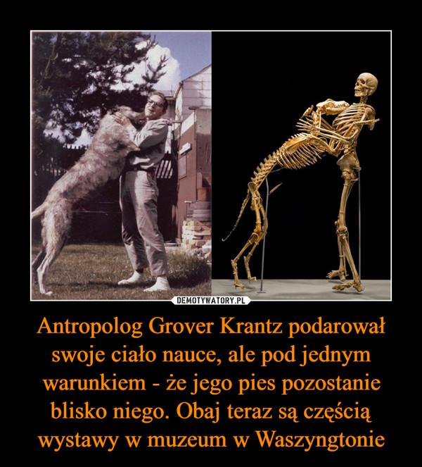 Antropolog Grover Krantz podarował swoje ciało nauce, ale pod jednym warunkiem - że jego pies pozostanie blisko niego. Obaj teraz są częścią wystawy w muzeum w Waszyngtonie –
