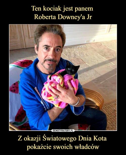 Ten kociak jest panem  Roberta Downey'a Jr Z okazji Światowego Dnia Kota  pokażcie swoich władców