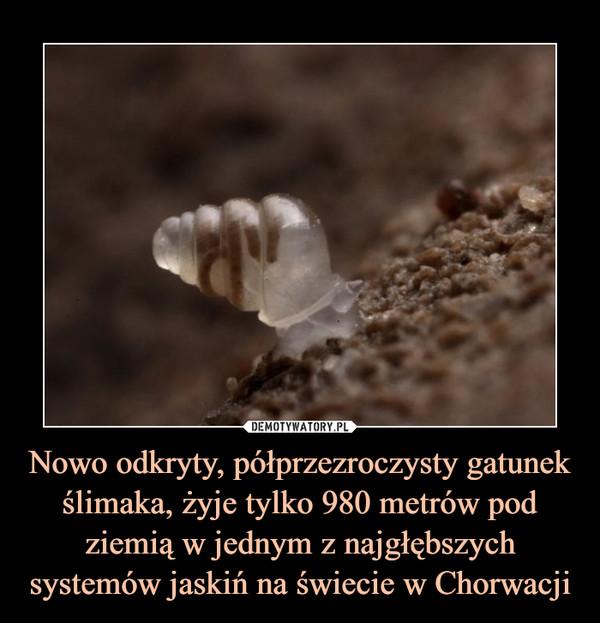 Nowo odkryty, półprzezroczysty gatunek ślimaka, żyje tylko 980 metrów pod ziemią w jednym z najgłębszych systemów jaskiń na świecie w Chorwacji –