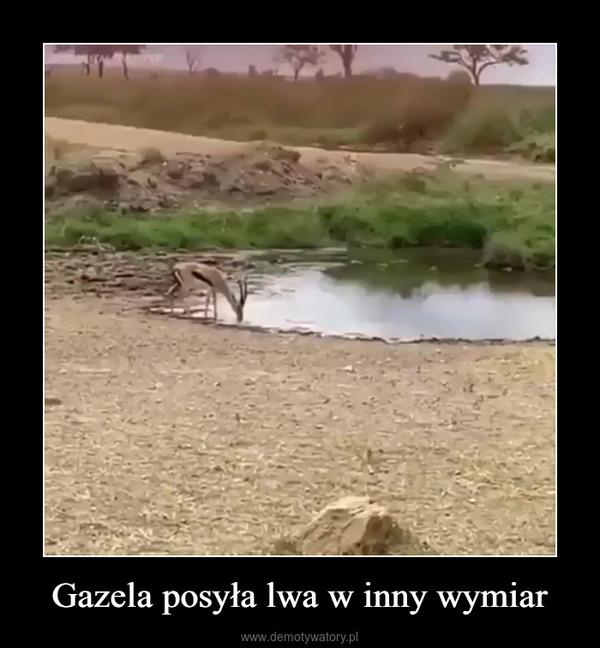 Gazela posyła lwa w inny wymiar –