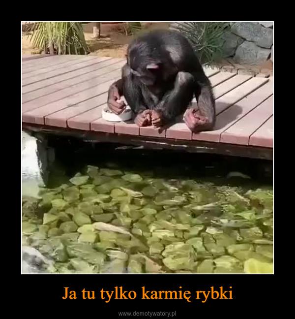 Ja tu tylko karmię rybki –