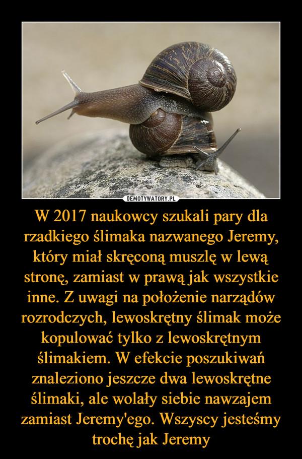 W 2017 naukowcy szukali pary dla rzadkiego ślimaka nazwanego Jeremy, który miał skręconą muszlę w lewą stronę, zamiast w prawą jak wszystkie inne. Z uwagi na położenie narządów rozrodczych, lewoskrętny ślimak może kopulować tylko z lewoskrętnym ślimakiem. W efekcie poszukiwań znaleziono jeszcze dwa lewoskrętne ślimaki, ale wolały siebie nawzajem zamiast Jeremy'ego. Wszyscy jesteśmy trochę jak Jeremy