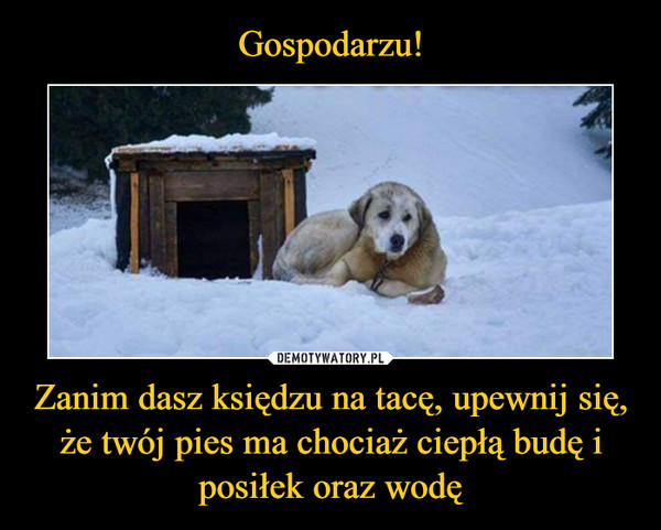 Zanim dasz księdzu na tacę, upewnij się, że twój pies ma chociaż ciepłą budę i posiłek oraz wodę –