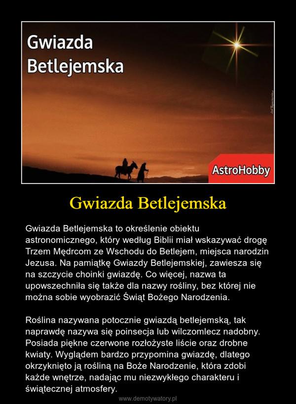 Gwiazda Betlejemska – Gwiazda Betlejemska to określenie obiektu astronomicznego, który według Biblii miał wskazywać drogę Trzem Mędrcom ze Wschodu do Betlejem, miejsca narodzin Jezusa. Na pamiątkę Gwiazdy Betlejemskiej, zawiesza się na szczycie choinki gwiazdę. Co więcej, nazwa ta upowszechniła się także dla nazwy rośliny, bez której nie można sobie wyobrazić Świąt Bożego Narodzenia.Roślina nazywana potocznie gwiazdą betlejemską, tak naprawdę nazywa się poinsecja lub wilczomlecz nadobny. Posiada piękne czerwone rozłożyste liście oraz drobne kwiaty. Wyglądem bardzo przypomina gwiazdę, dlatego okrzyknięto ją rośliną na Boże Narodzenie, która zdobi każde wnętrze, nadając mu niezwykłego charakteru i świątecznej atmosfery.