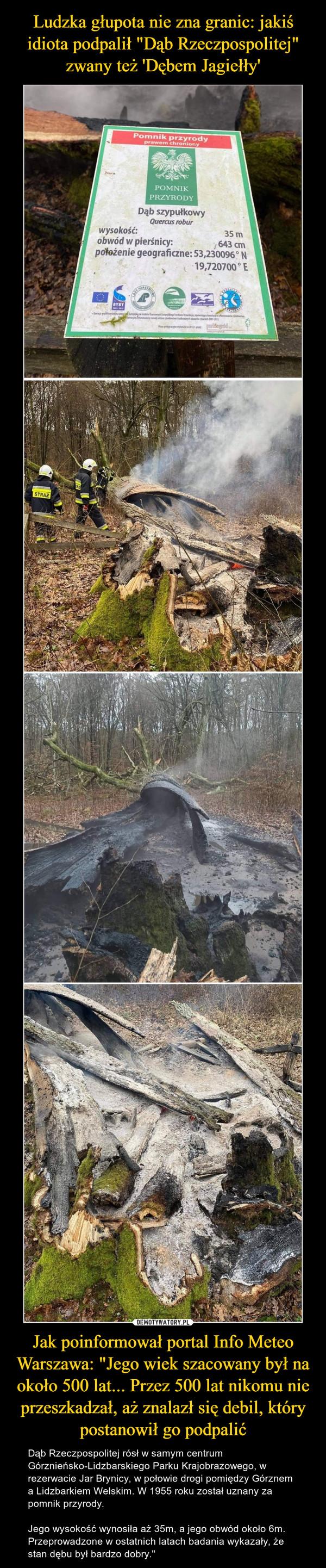 """Jak poinformował portal Info Meteo Warszawa: """"Jego wiek szacowany był na około 500 lat... Przez 500 lat nikomu nie przeszkadzał, aż znalazł się debil, który postanowił go podpalić – Dąb Rzeczpospolitej rósł w samym centrum Górznieńsko-Lidzbarskiego Parku Krajobrazowego, w rezerwacie Jar Brynicy, w połowie drogi pomiędzy Górznem a Lidzbarkiem Welskim. W 1955 roku został uznany za pomnik przyrody. Jego wysokość wynosiła aż 35m, a jego obwód około 6m. Przeprowadzone w ostatnich latach badania wykazały, że stan dębu był bardzo dobry."""""""
