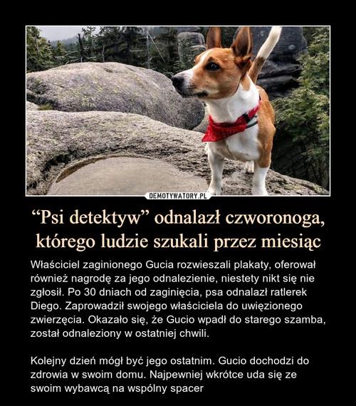 """""""Psi detektyw"""" odnalazł czworonoga, którego ludzie szukali przez miesiąc"""