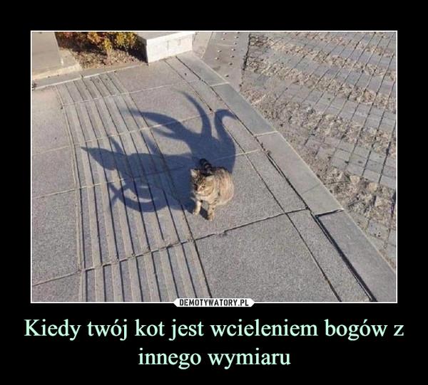 Kiedy twój kot jest wcieleniem bogów z innego wymiaru –