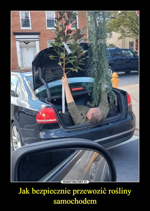 Jak bezpiecznie przewozić rośliny samochodem