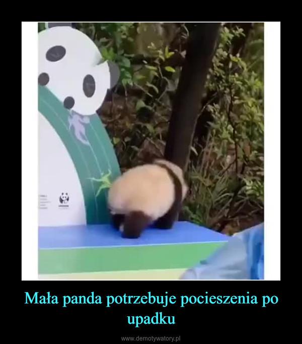 Mała panda potrzebuje pocieszenia po upadku –