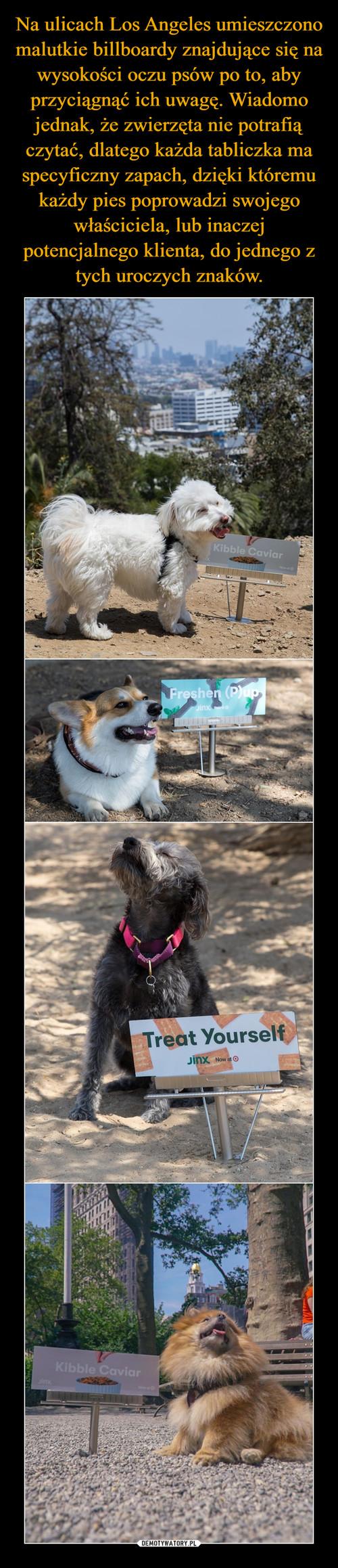 Na ulicach Los Angeles umieszczono malutkie billboardy znajdujące się na wysokości oczu psów po to, aby przyciągnąć ich uwagę. Wiadomo jednak, że zwierzęta nie potrafią czytać, dlatego każda tabliczka ma specyficzny zapach, dzięki któremu każdy pies poprowadzi swojego właściciela, lub inaczej potencjalnego klienta, do jednego z tych uroczych znaków.