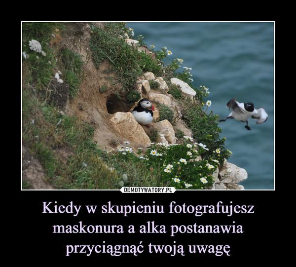 Kiedy w skupieniu fotografujesz maskonura a alka postanawia przyciągnąć twoją uwagę –