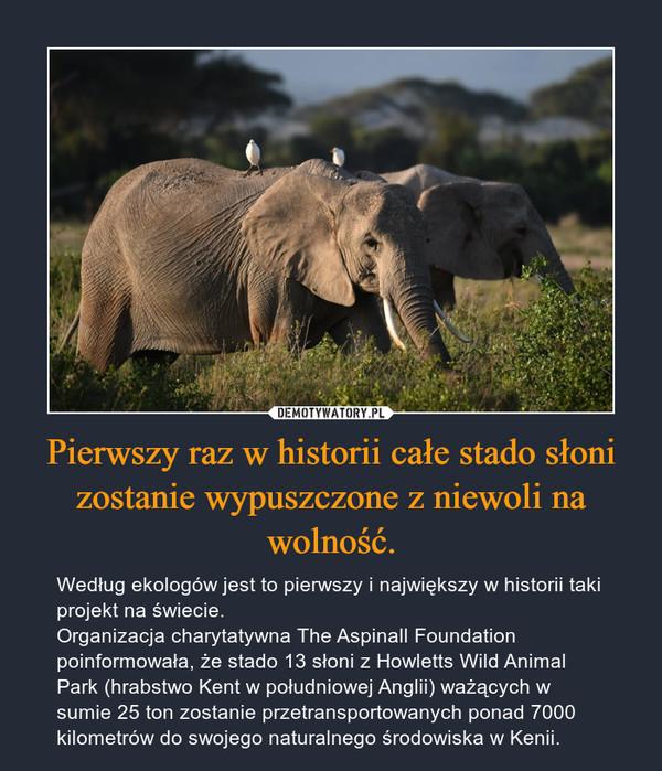 Pierwszy raz w historii całe stado słoni zostanie wypuszczone z niewoli na wolność. – Według ekologów jest to pierwszy i największy w historii taki projekt na świecie. Organizacja charytatywna The Aspinall Foundation poinformowała, że stado 13 słoni z Howletts Wild Animal Park (hrabstwo Kent w południowej Anglii) ważących w sumie 25 ton zostanie przetransportowanych ponad 7000 kilometrów do swojego naturalnego środowiska w Kenii.