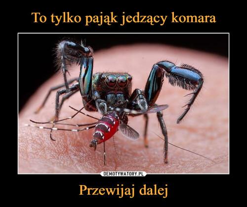 To tylko pająk jedzący komara Przewijaj dalej