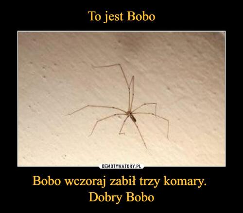 To jest Bobo Bobo wczoraj zabił trzy komary.  Dobry Bobo