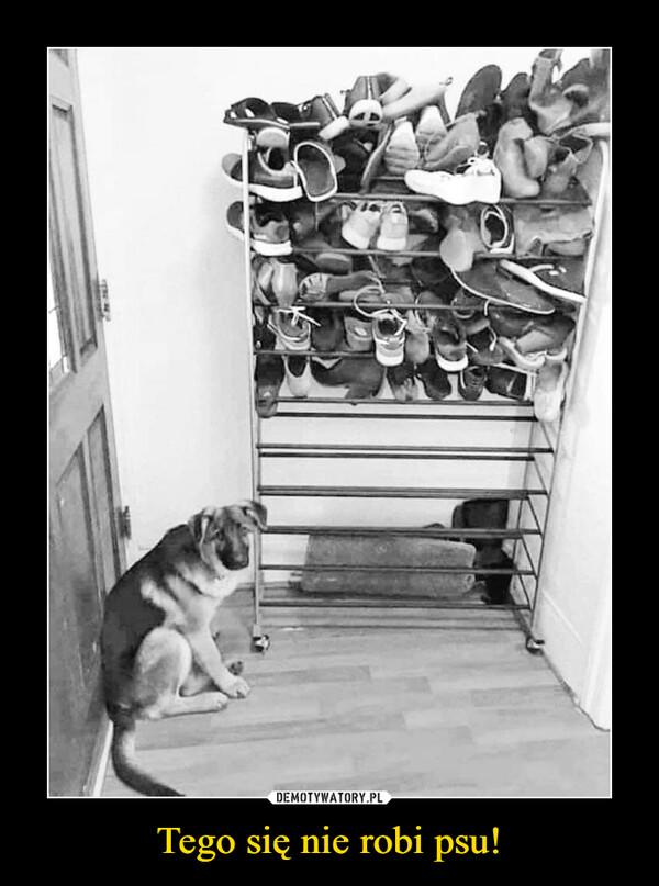 Tego się nie robi psu! –