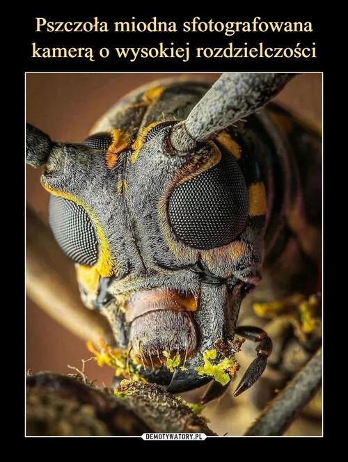 Pszczoła miodna sfotografowana kamerą o wysokiej rozdzielczości