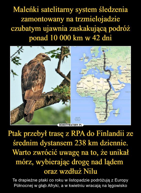 Ptak przebył trasę z RPA do Finlandii ze średnim dystansem 238 km dziennie. Warto zwrócić uwagę na to, że unikał mórz, wybierając drogę nad lądem oraz wzdłuż Nilu – Te drapieżne ptaki co roku w listopadzie podróżują z Europy Północnej w głąb Afryki, a w kwietniu wracają na lęgowisko
