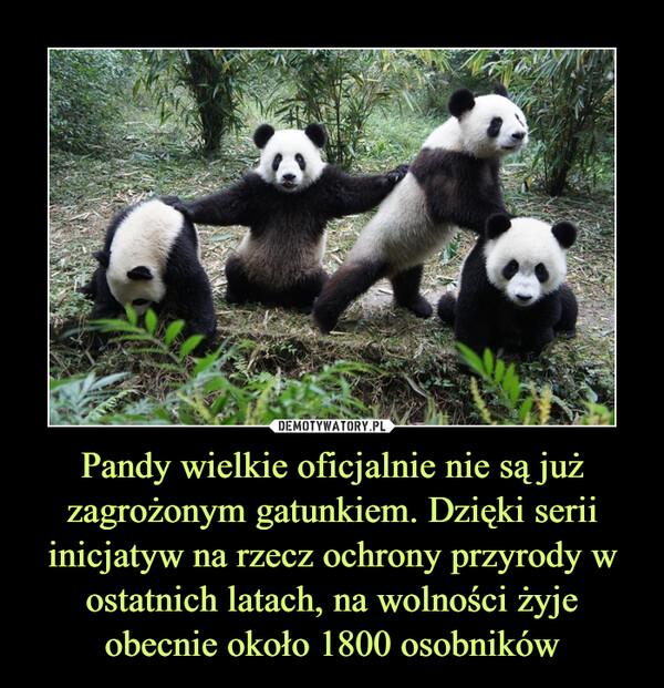 Pandy wielkie oficjalnie nie są już zagrożonym gatunkiem. Dzięki serii inicjatyw na rzecz ochrony przyrody w ostatnich latach, na wolności żyje obecnie około 1800 osobników –