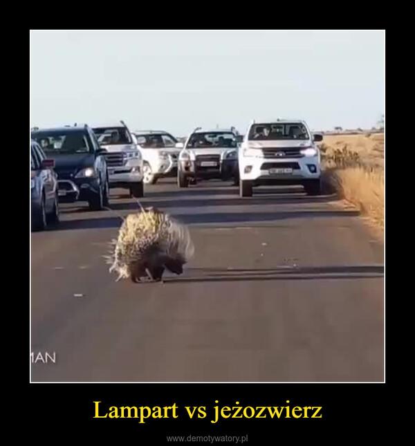 Lampart vs jeżozwierz –