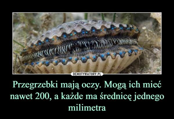 Przegrzebki mają oczy. Mogą ich mieć nawet 200, a każde ma średnicę jednego milimetra –