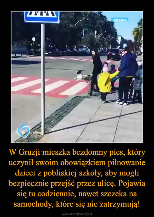 W Gruzji mieszka bezdomny pies, który uczynił swoim obowiązkiem pilnowanie dzieci z pobliskiej szkoły, aby mogli bezpiecznie przejść przez ulicę. Pojawia się tu codziennie, nawet szczeka na samochody, które się nie zatrzymują! –