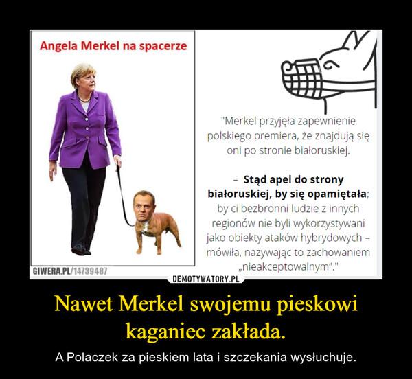 Nawet Merkel swojemu pieskowi kaganiec zakłada. – A Polaczek za pieskiem lata i szczekania wysłuchuje.